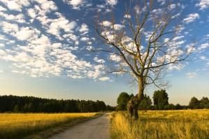 Stare drzewo-okolice Kruklanek