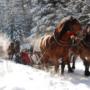 Biegun Zimna na Mazurach! Aktywny biwak zimowych ludzi w Puszczy Boreckiej.
